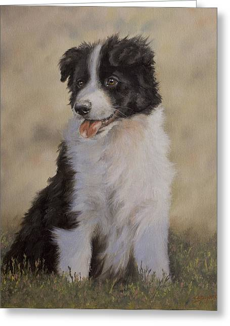 Border Collie Pup Portrait V Greeting Card