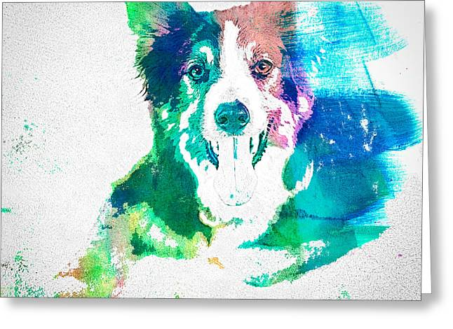 Border Collie - Wc Greeting Card