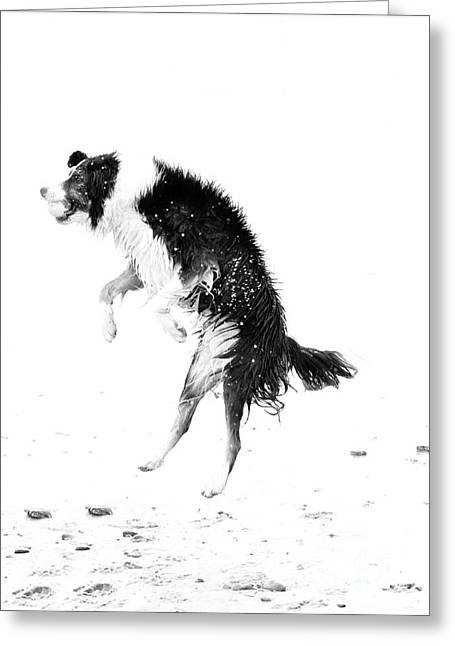 Border Collie With Ball Greeting Card by Jan Tyler