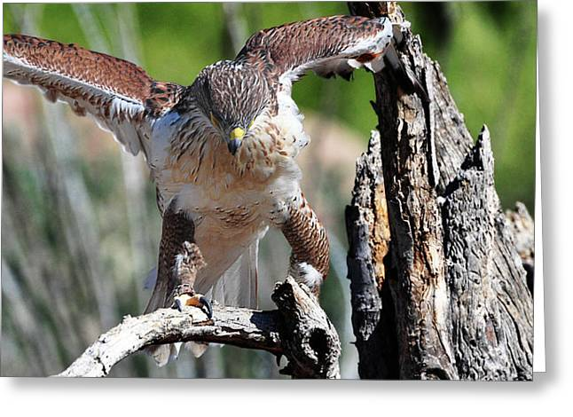 Born To Be Free Greeting Card by Barbara Manis