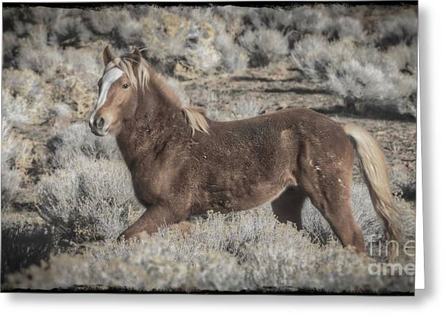 Born To Be Wild Greeting Card by Mitch Shindelbower