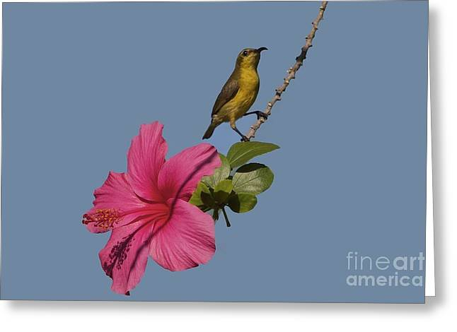 Greeting Card featuring the photograph Bornean Mountain Whistler by Gary Bridger