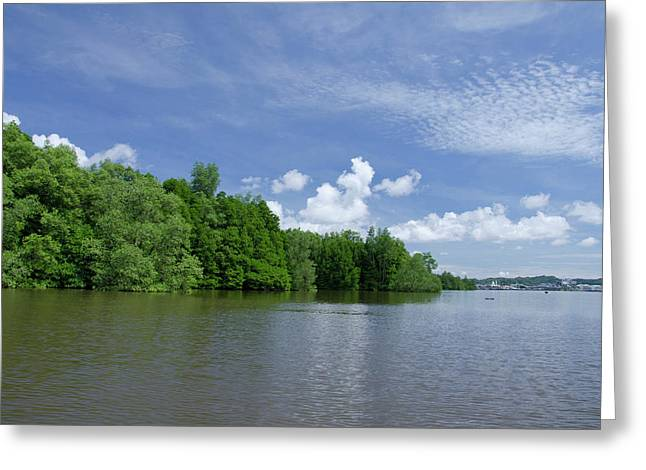 Borneo, Brunei Dense Mangrove Forest Greeting Card