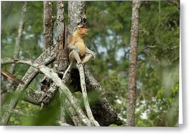 Borneo, Brunei Mangrove Forest Greeting Card