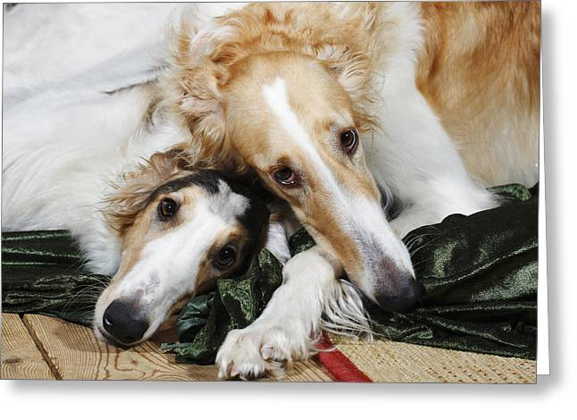 Borzoi Dogs In Love Greeting Card