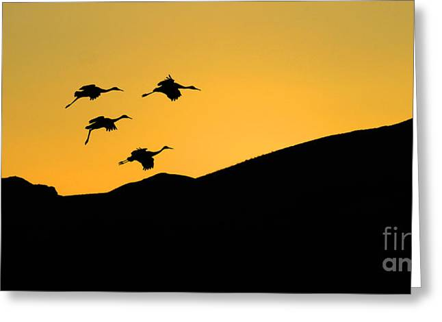 Bosque Del Apache Last Light Greeting Card by Bob Christopher