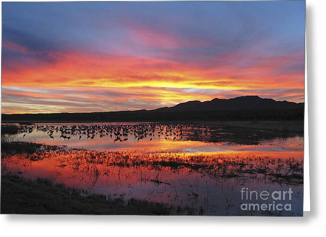 Bosque Sunset I Greeting Card by Steven Ralser