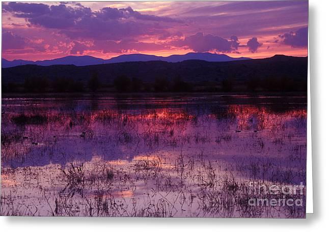 Bosque Sunset - Purple Greeting Card
