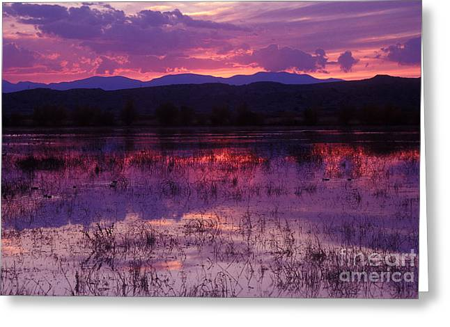 Bosque Sunset - Purple Greeting Card by Steven Ralser
