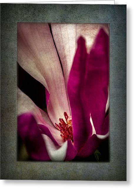 Boston Magnolia Greeting Card by Eduard Moldoveanu
