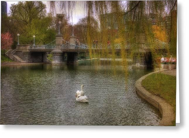 Boston Public Garden Swans Greeting Card by Joann Vitali