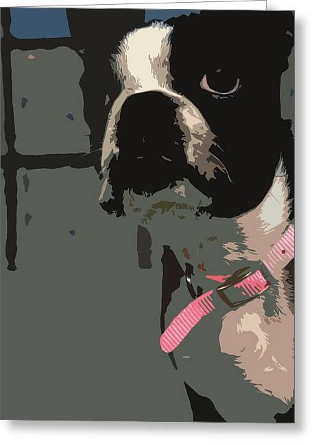 Boston Terrier Art01 Greeting Card by Donald Williams