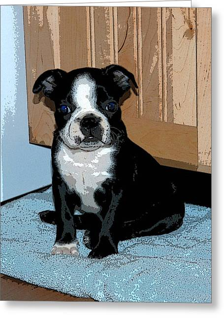 Boston Terrier Art02 Greeting Card by Donald Williams