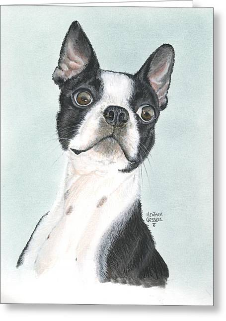 Boston Terrier Greeting Card by Heather Gessell