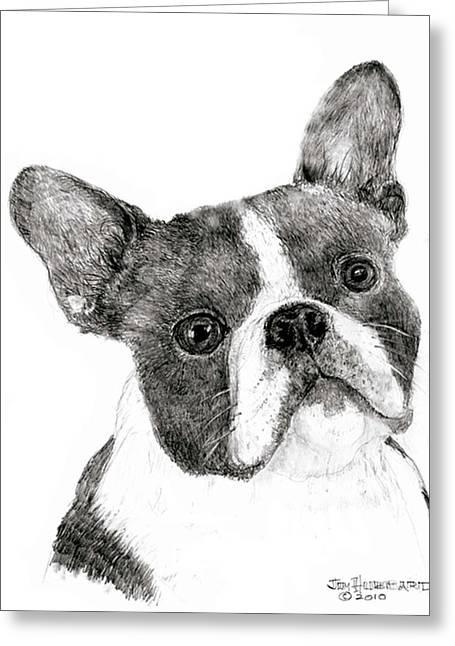 Greeting Card featuring the drawing Boston Terrier by Jim Hubbard