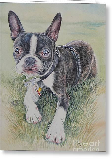 Boston Terrier Puppy Greeting Card by Gail Dolphin
