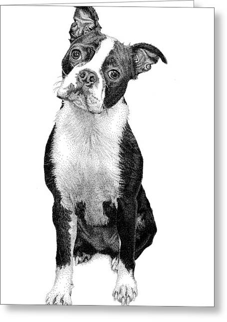 Boston Terrier Greeting Card by Rob Christensen