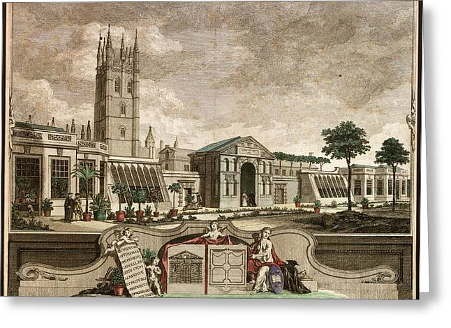 Botanic Garden Greeting Card by Museum Of The History Of Science/oxford University Images