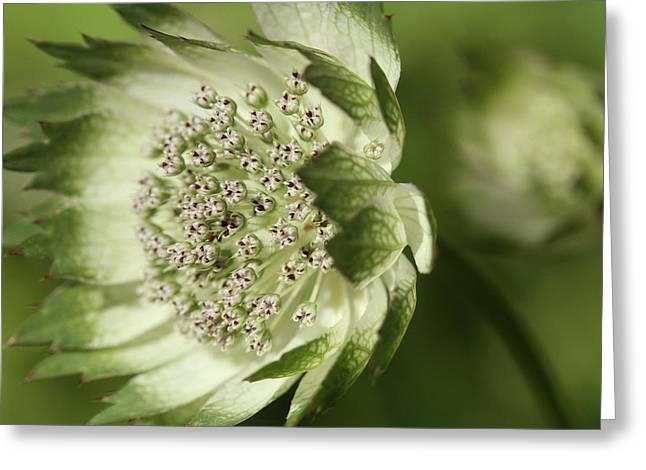 Botanica .. Turning  Greeting Card
