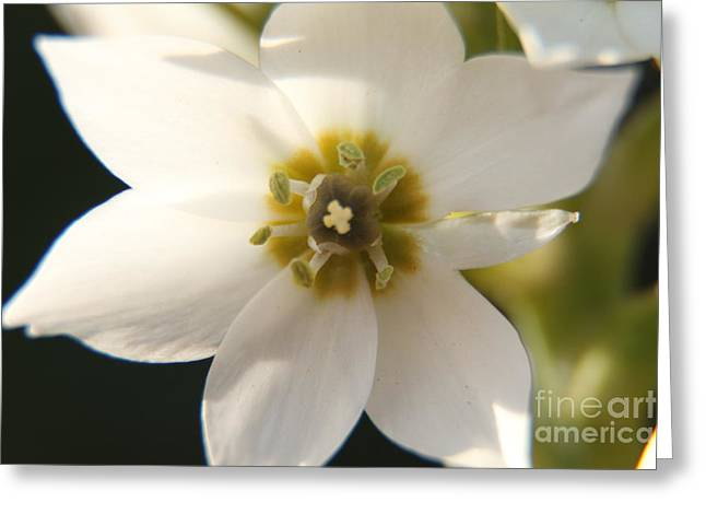 Botanical Purity Greeting Card by Taschja Hattingh