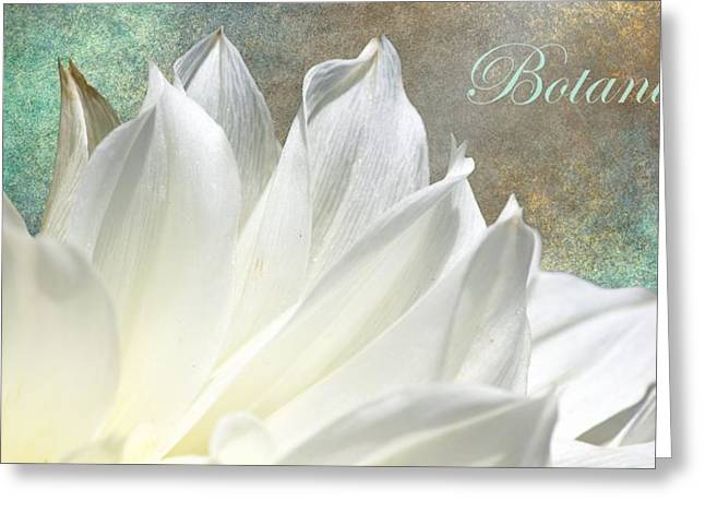 Botanique Greeting Card by Barbara Chichester