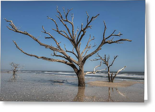Botany Bay And Edisto Beach Greeting Card