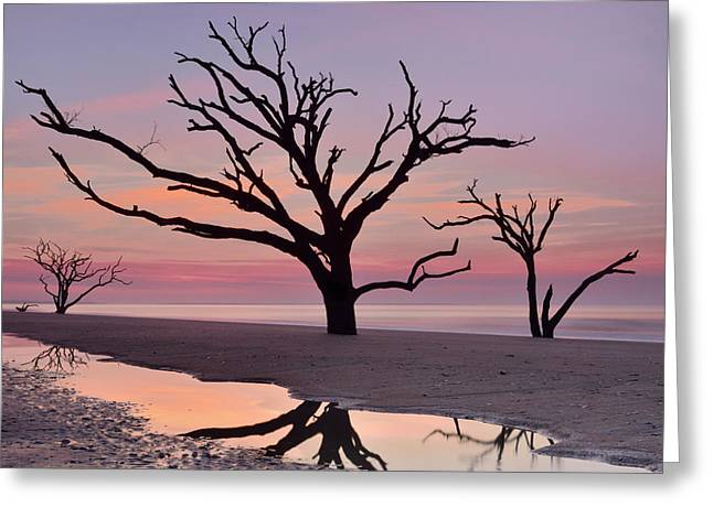 Botany Bay Trees Greeting Card