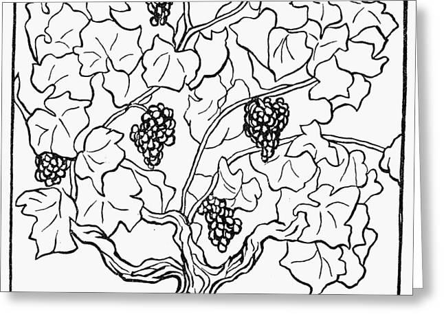 Botany Grapes, 1910 Greeting Card by Granger