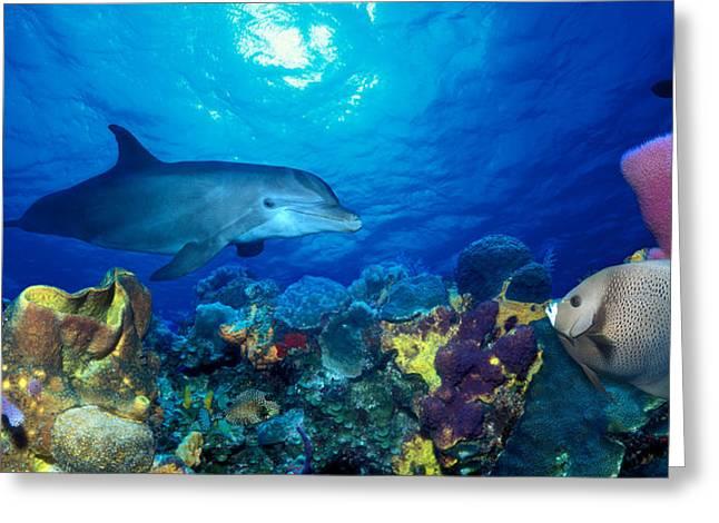 Bottle-nosed Dolphin Tursiops Truncatus Greeting Card