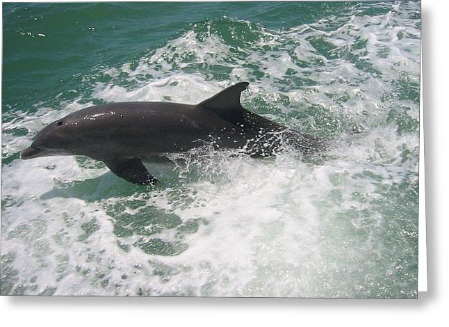 Greeting Card featuring the photograph Bottlenose Dolphin Catching A Wave by Jean Marie Maggi