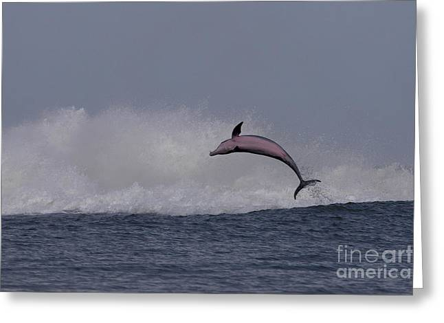 Bottlenose Dolphin Photo Greeting Card