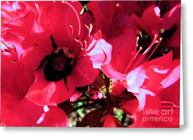 Greeting Card featuring the photograph Bottoms Up by Robyn King