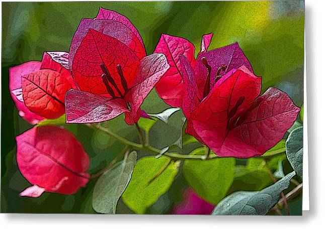 Greeting Card featuring the photograph Bougainvillea At Casa Candiles Ixtapa Mexico by Rob Huntley