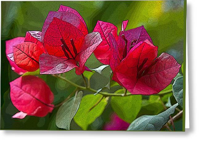Bougainvillea At Casa Candiles Ixtapa Mexico Greeting Card