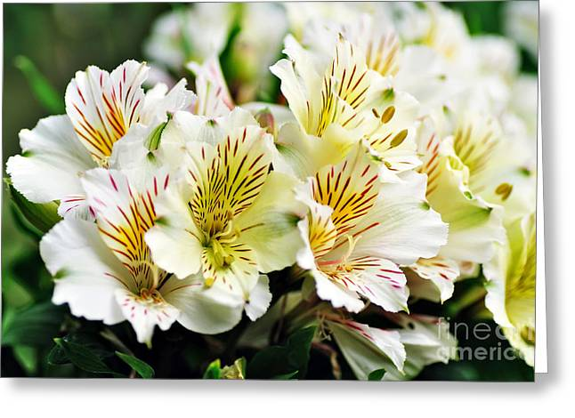 Bouquet Of Alstroemeria Greeting Card by Kaye Menner