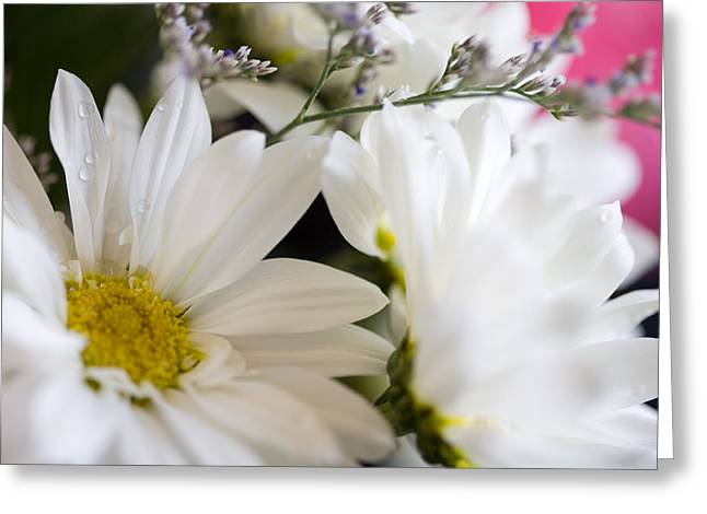 Bouquet Of Daisies Greeting Card by John Holloway