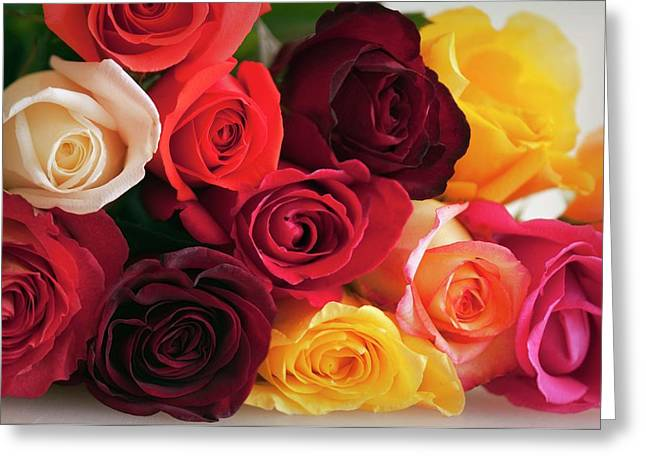 Bouquet Of Mixed Roses (rosa Hybrid) Greeting Card by Maria Mosolova