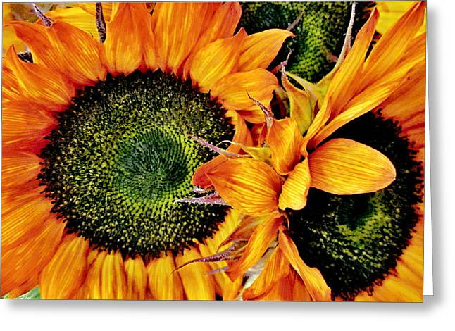Bouquet Of Sunflowers Greeting Card by Danielle  Parent