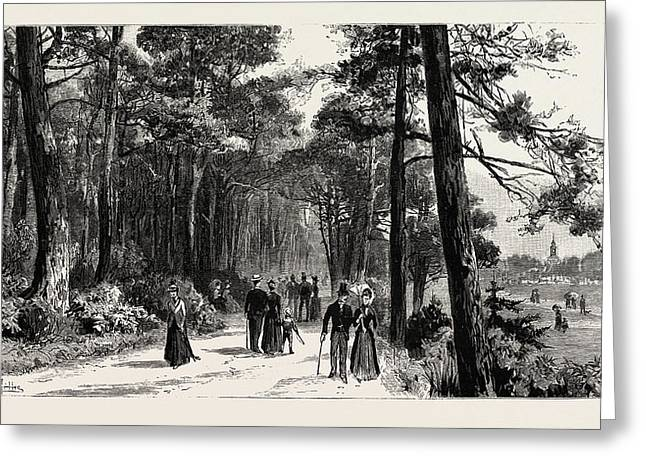 Bournemouth, The Invalids Walk In Public Gardens Greeting Card by English School
