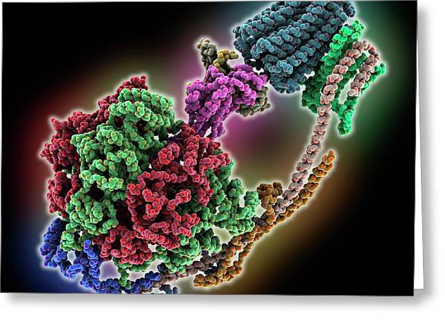 Bovine Mitochondrial Atp Synthase Greeting Card by Laguna Design/science Photo Library