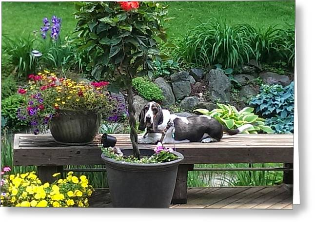 Bowie In The Garden Greeting Card