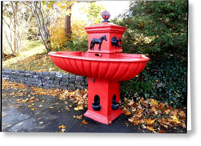 Bowring Park Horse Trough  Greeting Card