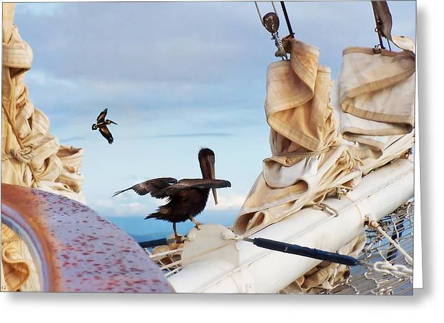 Bowsprit Pelicans Greeting Card by Deborah Smith