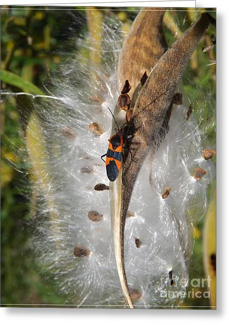 Boxelder On Butterfly Milkweed 2 Greeting Card by Sara  Raber