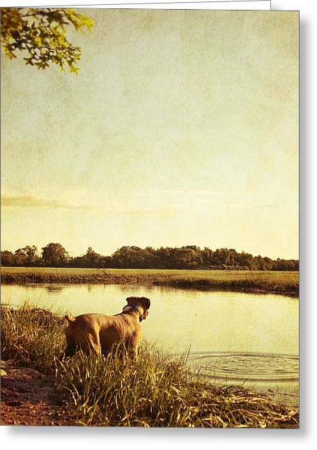 Boxer Dog By The Pond At Sunset Greeting Card by Stephanie McDowell