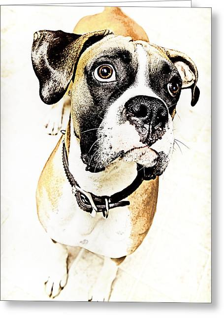 Greeting Card featuring the photograph Boxer Dog Poster by Peter v Quenter