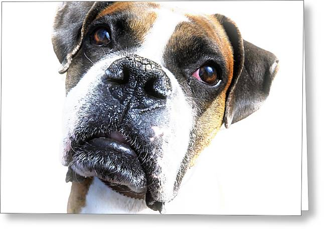 Boxer Expression Greeting Card by Susan Leggett