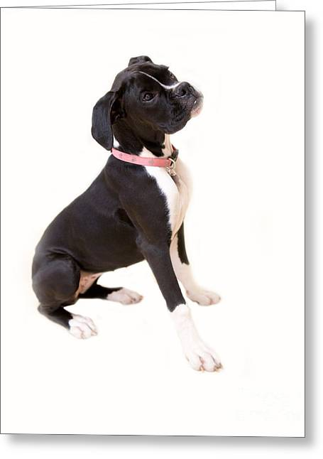 Boxer Girl 1 Greeting Card by Rebecca Cozart