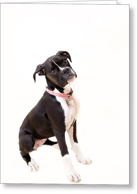 Boxer Girl 2 Greeting Card by Rebecca Cozart