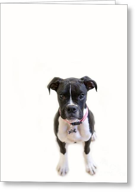 Boxer Girl 3 Greeting Card by Rebecca Cozart
